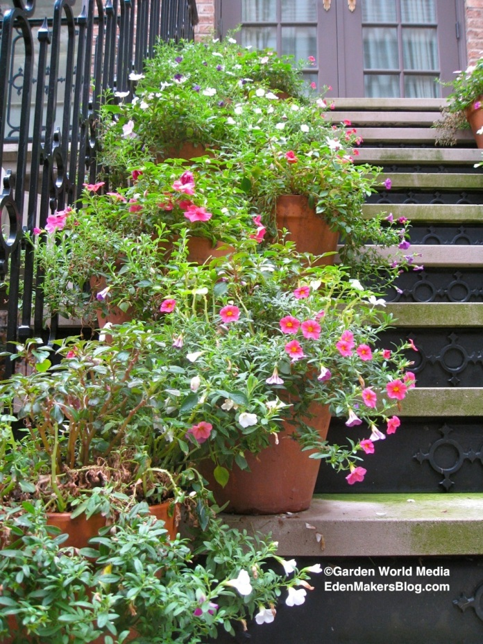 Add Potted Plants Near Your Front Door!